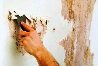 Обработка стен дома от плесени